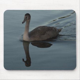 Mute Swan Cygnet Mouse Mat