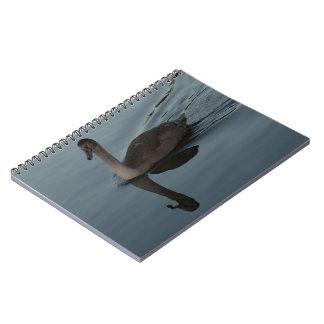 Mute Swan Cygnet Notebooks