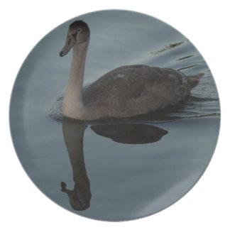 Mute Swan Cygnet Plate