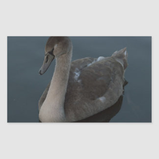 Mute Swan Cygnet Rectangular Sticker