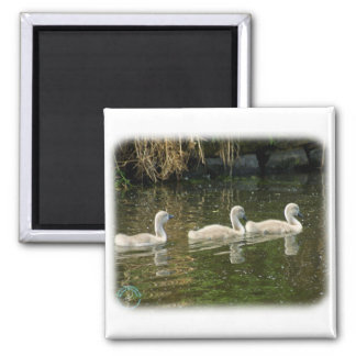 Mute Swan Cygnets 9R054D-147 Refrigerator Magnet