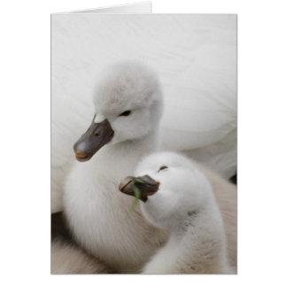 Mute Swan cygnets. Greeting Card