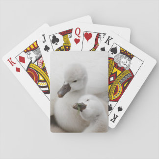 Mute Swan cygnets. Playing Cards