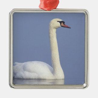 Mute Swan, Cygnus olor, adult in fog, Christmas Ornament