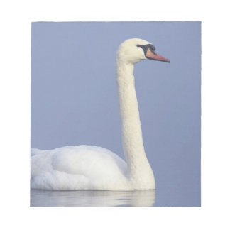 Mute Swan, Cygnus olor, adult in fog, Notepad