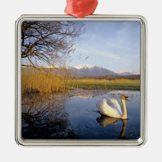 Mute Swan, Cygnus olor,adult with Alps in Christmas Ornament