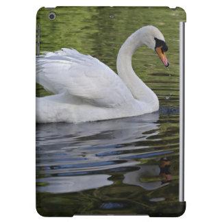 Mute Swan (Cygnus olor) Louisville, Kentucky 2