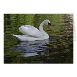 Mute Swan (Cygnus olor) Louisville, Kentucky 2 Card