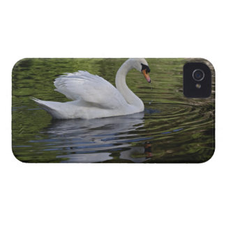 Mute Swan (Cygnus olor) Louisville, Kentucky 2 iPhone 4 Case