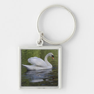 Mute Swan (Cygnus olor) Louisville, Kentucky 2 Key Ring