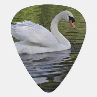 Mute Swan (Cygnus olor) Louisville, Kentucky 2 Plectrum