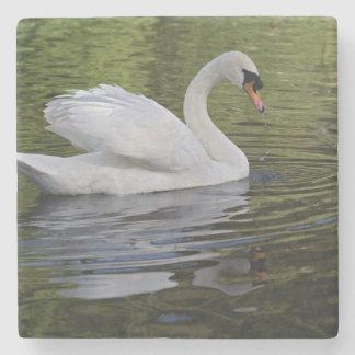 Mute Swan (Cygnus olor) Louisville, Kentucky 2 Stone Coaster