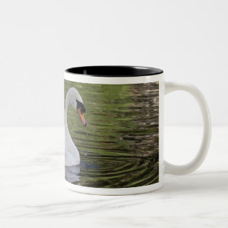 Mute Swan (Cygnus olor) Louisville, Kentucky 2 Two-Tone Coffee Mug