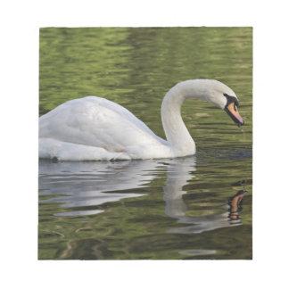 Mute Swan (Cygnus olor) Louisville, Kentucky Notepad