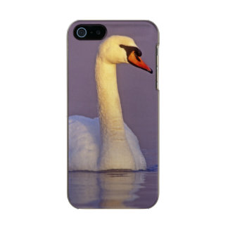 Mute Swan, Cygnus olor,male, Unterlunkhofen, Incipio Feather® Shine iPhone 5 Case