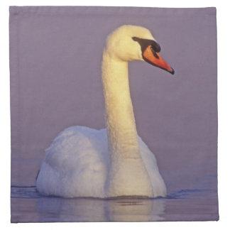 Mute Swan, Cygnus olor,male, Unterlunkhofen, Napkin
