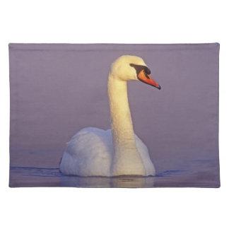 Mute Swan, Cygnus olor,male, Unterlunkhofen, Placemat