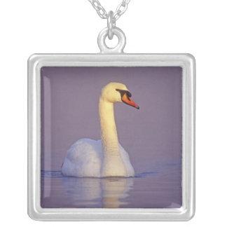 Mute Swan, Cygnus olor,male, Unterlunkhofen, Silver Plated Necklace