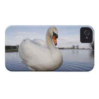 Mute Swan (Cygnus olor) on flooded field, iPhone 4 Case