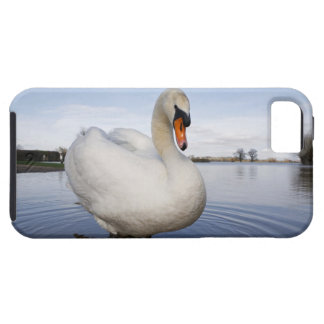 Mute Swan (Cygnus olor) on flooded field, iPhone 5 Cover