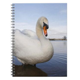 Mute Swan (Cygnus olor) on flooded field, Notebook