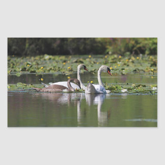 Mute swan family swimming rectangular sticker