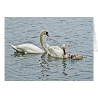 Mute Swan Famly Greeting Card