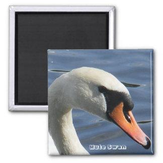 Mute Swan Magnet