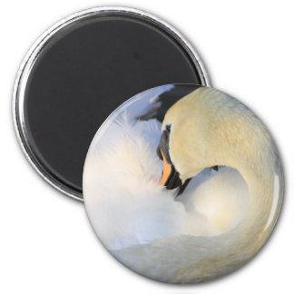 Mute Swan Fridge Magnets