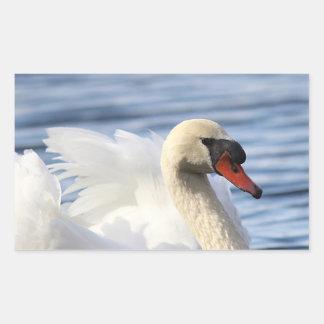 Mute swan on pond rectangular sticker