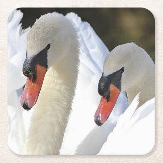 Mute Swan Pair Square Paper Coaster