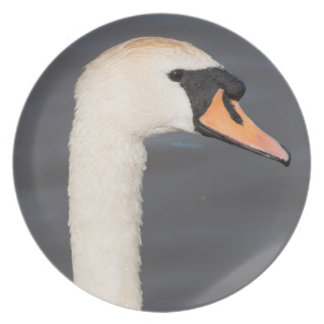 Mute Swan Plate