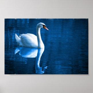 Mute Swan Poster Print