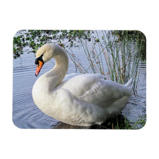 Mute Swan Magnets