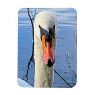 Mute Swan Flexible Magnet