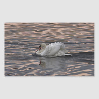 Mute swan swimming at sunset rectangular sticker