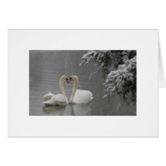 Mute Swans Courting Greeting Card