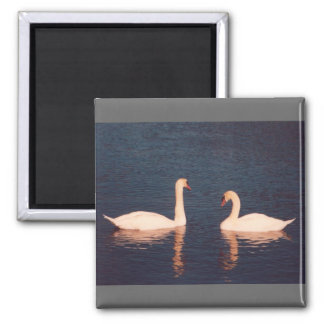 Mute Swans Magnet