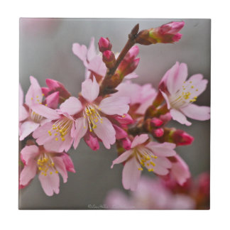 Muted Pink Japanese Cherry Blossoms Tile