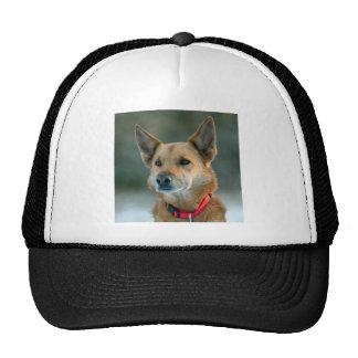 mutt dog with red collar trucker hat