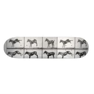 muybridge donkey 21.6 cm skateboard deck
