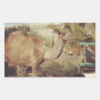 My beautiful camel rectangular sticker