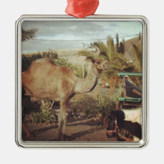 My beautiful camel Silver-Colored square decoration