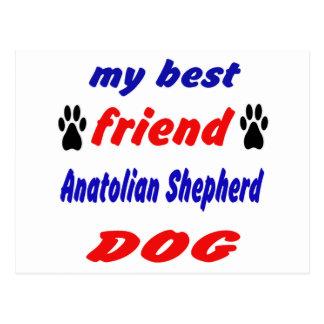 My best friend Anatolian Shepherd Dog Postcard