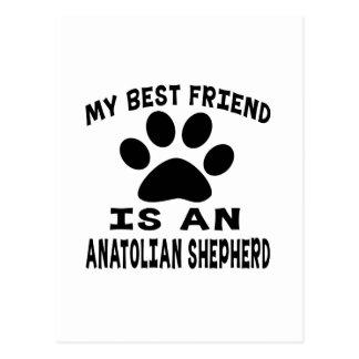 My Best Friend Is An Anatolian Shepherd dog Postcard