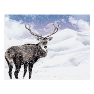 My Christmas Winter Stag! Postcard