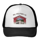My dog plays at Woof Pac Park Hats