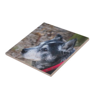 My dog square tile