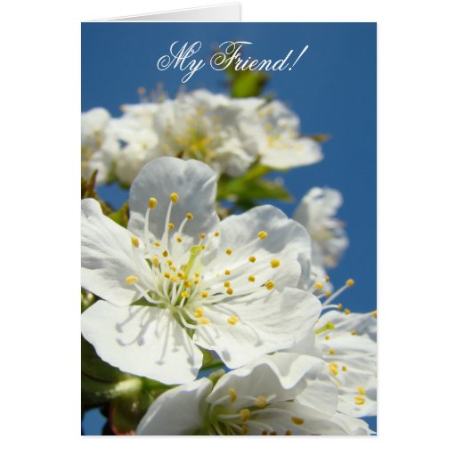 My Friend! Greeting Cards Spring Cherry Blossoms