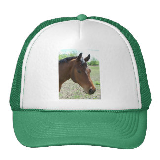 My Friend, The Horse Cap